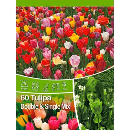 Tulipány Double and Single Mix velké balení